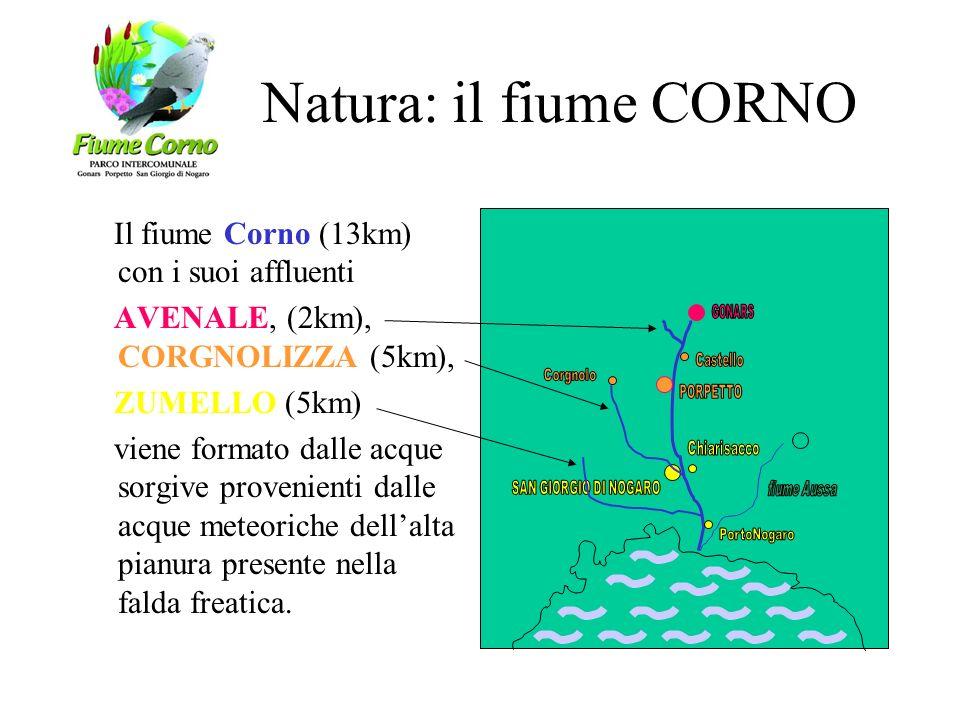 Natura: il fiume CORNO Il fiume Corno (13km) con i suoi affluenti