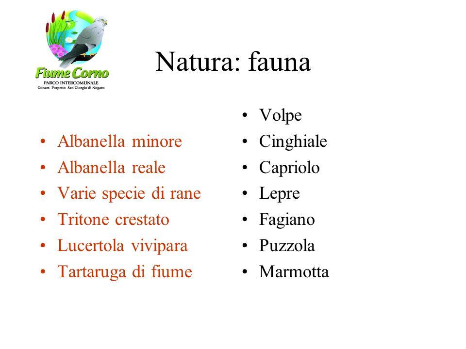 Natura: fauna Albanella minore Albanella reale Varie specie di rane