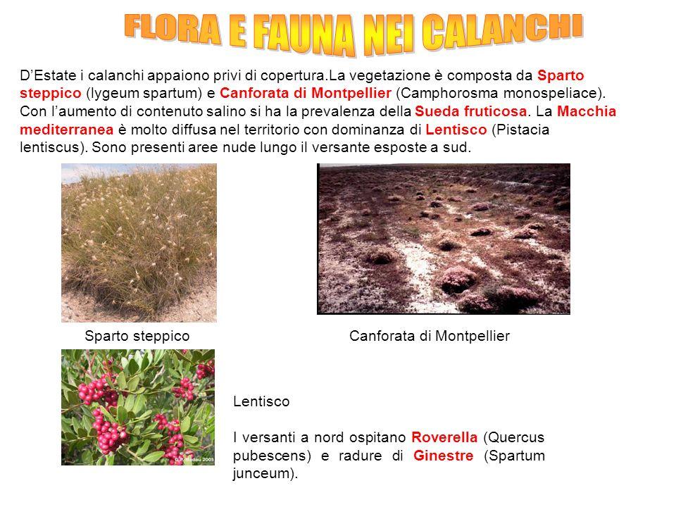 FLORA E FAUNA NEI CALANCHI