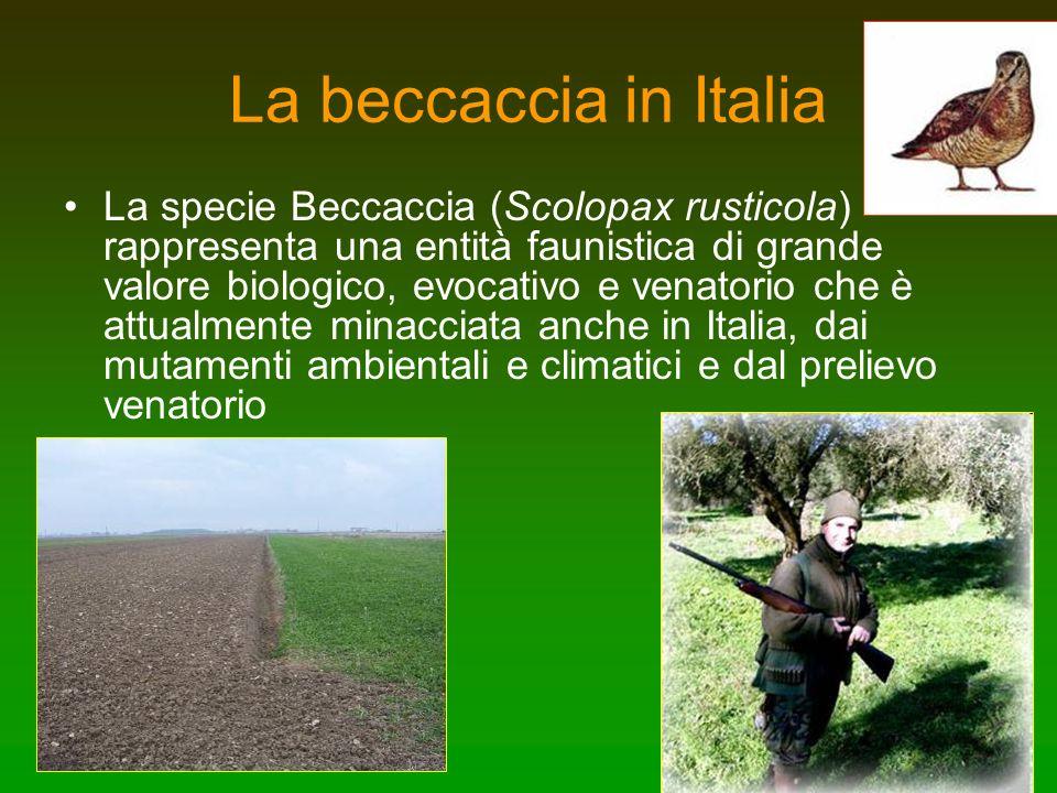 La beccaccia in Italia