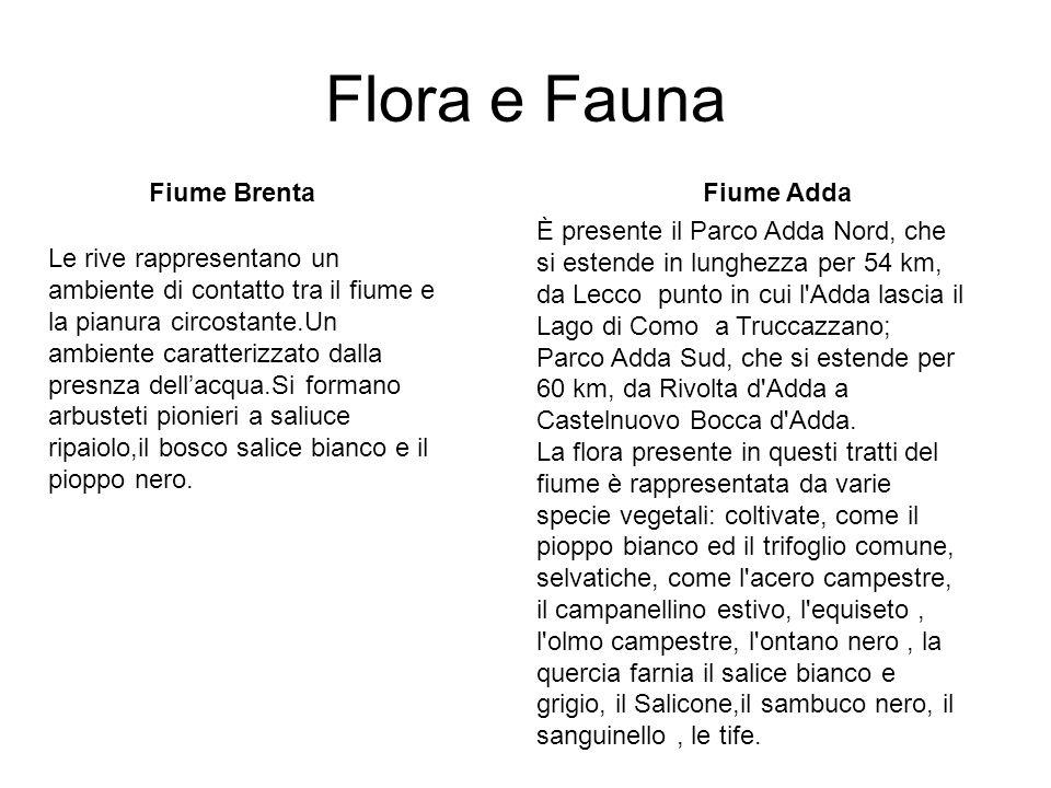Flora e Fauna Fiume Brenta Fiume Adda
