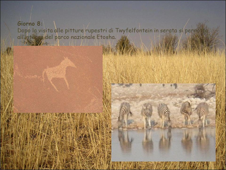 Giorno 8:Dopo la visita alle pitture rupestri di Twyfelfontein in serata si pernotta all'interno del parco nazionale Etosha.