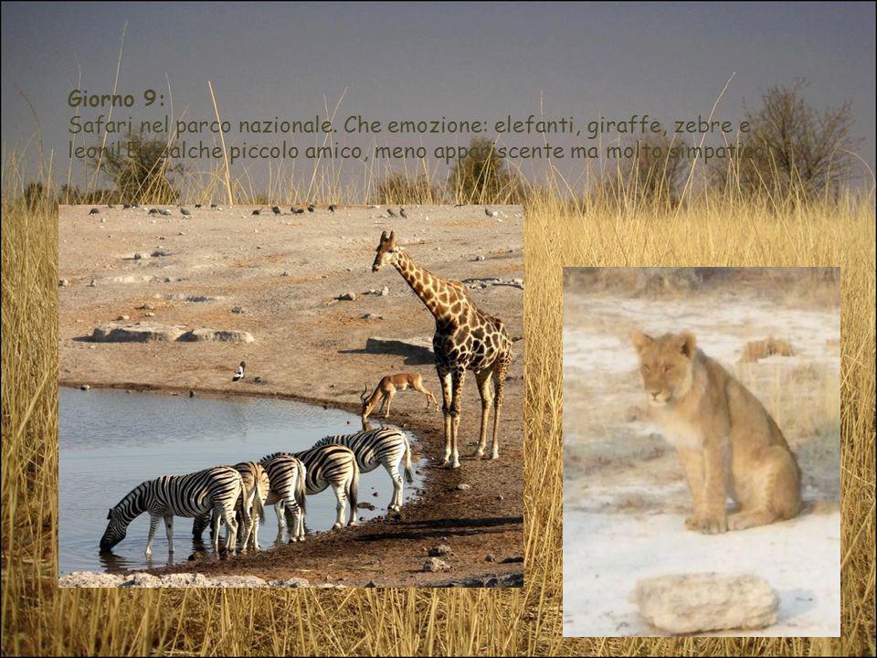 Giorno 9: Safari nel parco nazionale. Che emozione: elefanti, giraffe, zebre e leoni.