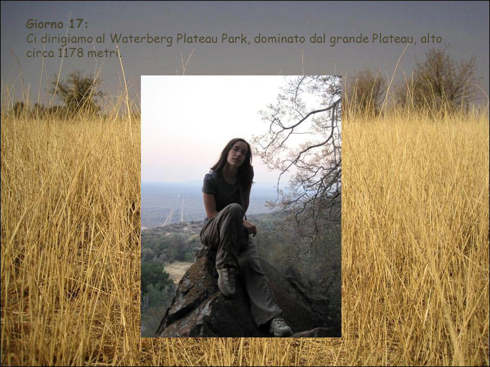 Giorno 17:Ci dirigiamo al Waterberg Plateau Park, dominato dal grande Plateau, alto circa 1178 metri.