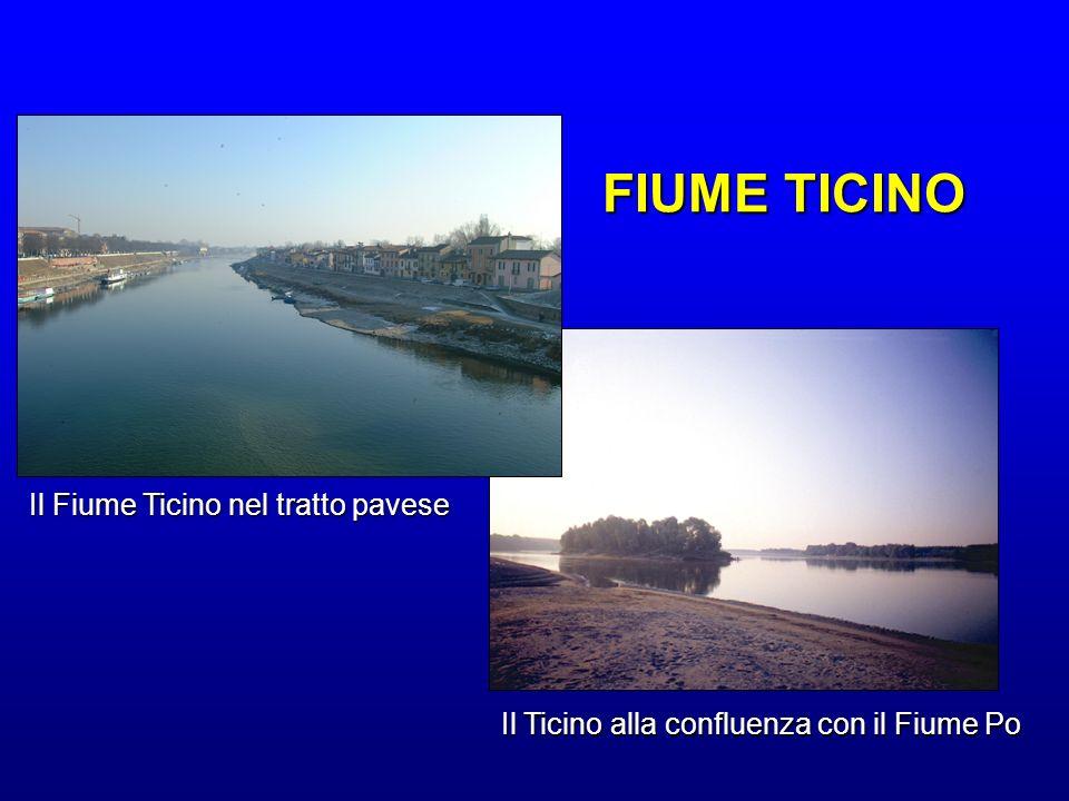 FIUME TICINO Il Fiume Ticino nel tratto pavese