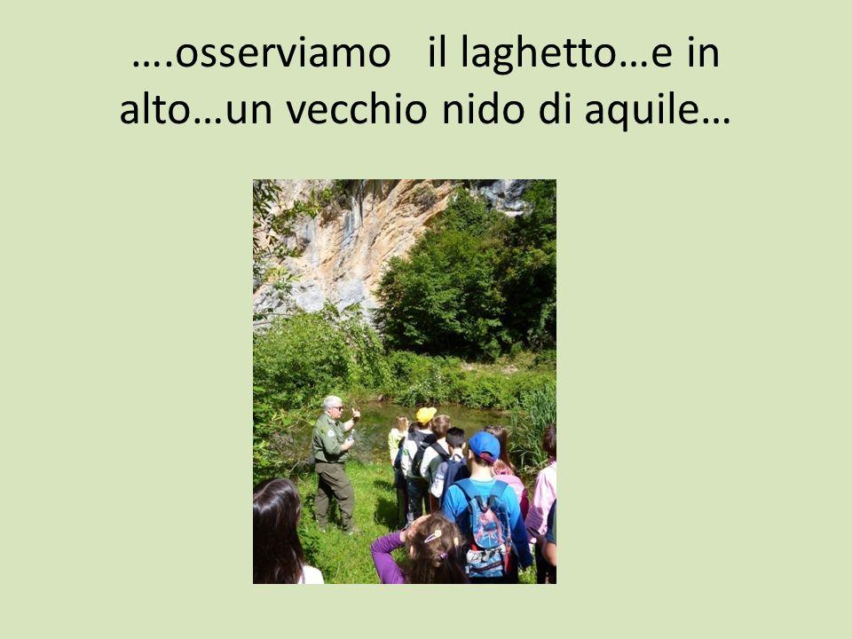 ….osserviamo il laghetto…e in alto…un vecchio nido di aquile…