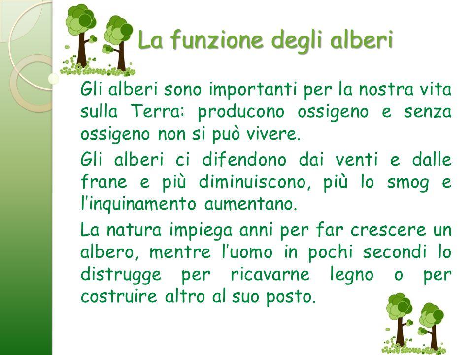 La funzione degli alberi