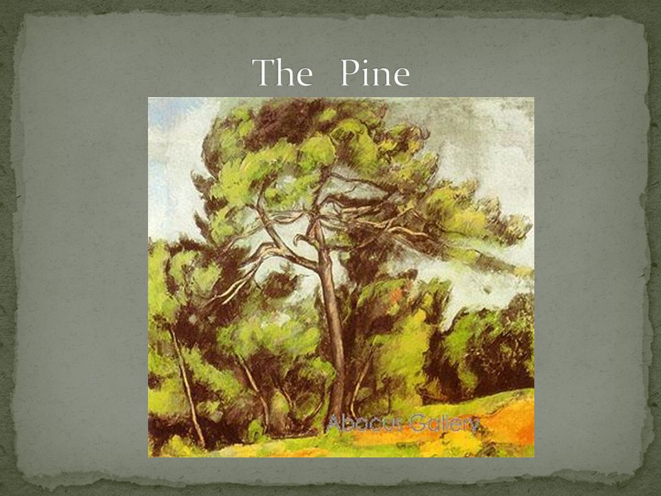 The Pine