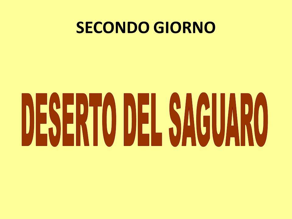 SECONDO GIORNO DESERTO DEL SAGUARO