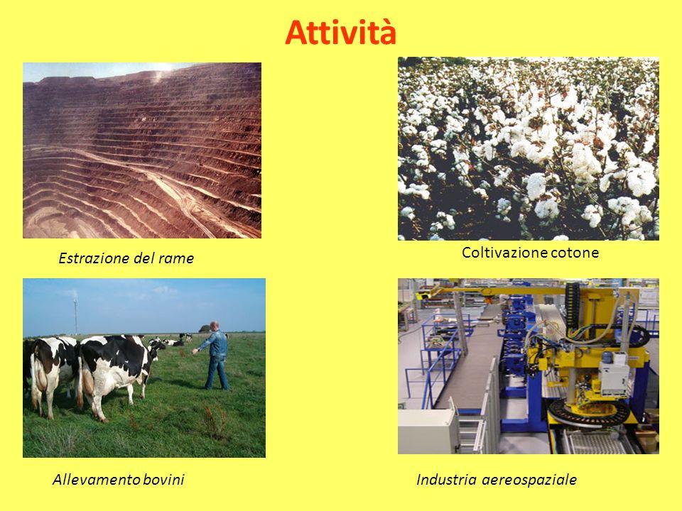 Attività Coltivazione cotone Estrazione del rame Allevamento bovini