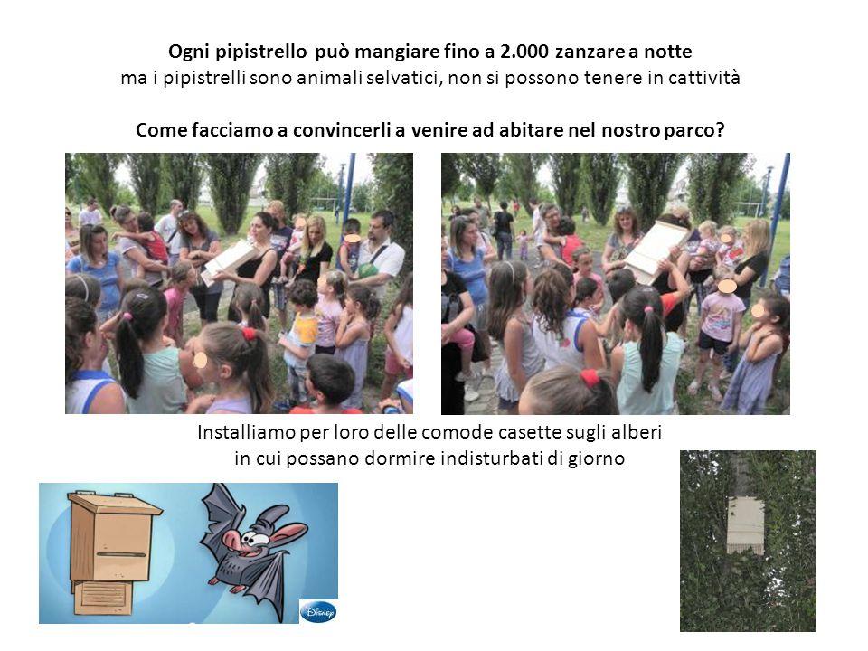 Ogni pipistrello può mangiare fino a 2.000 zanzare a notte