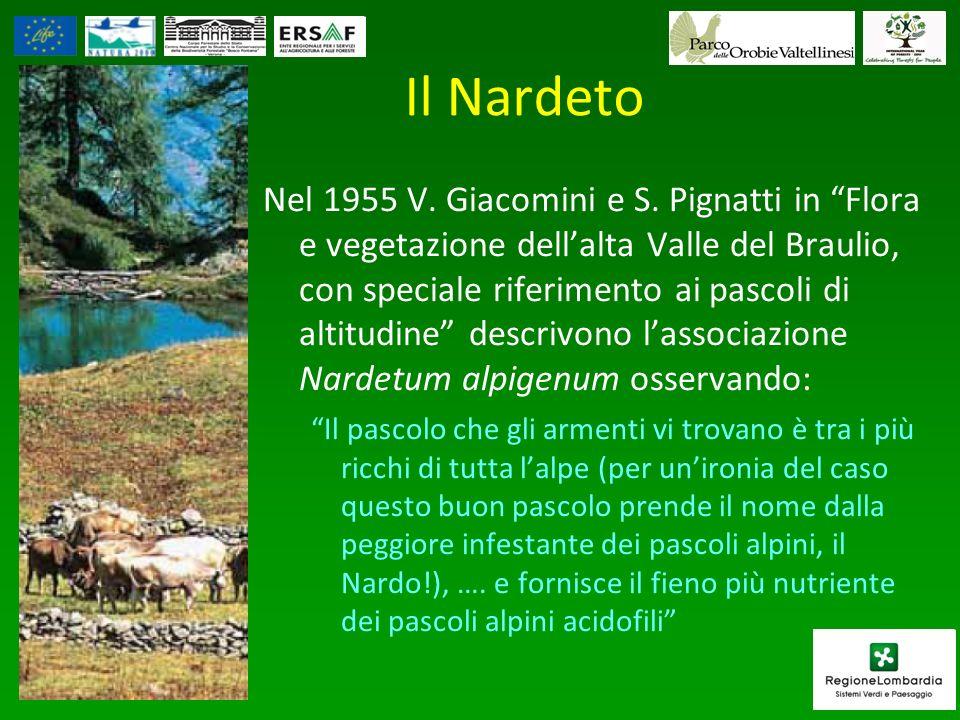 Il Nardeto
