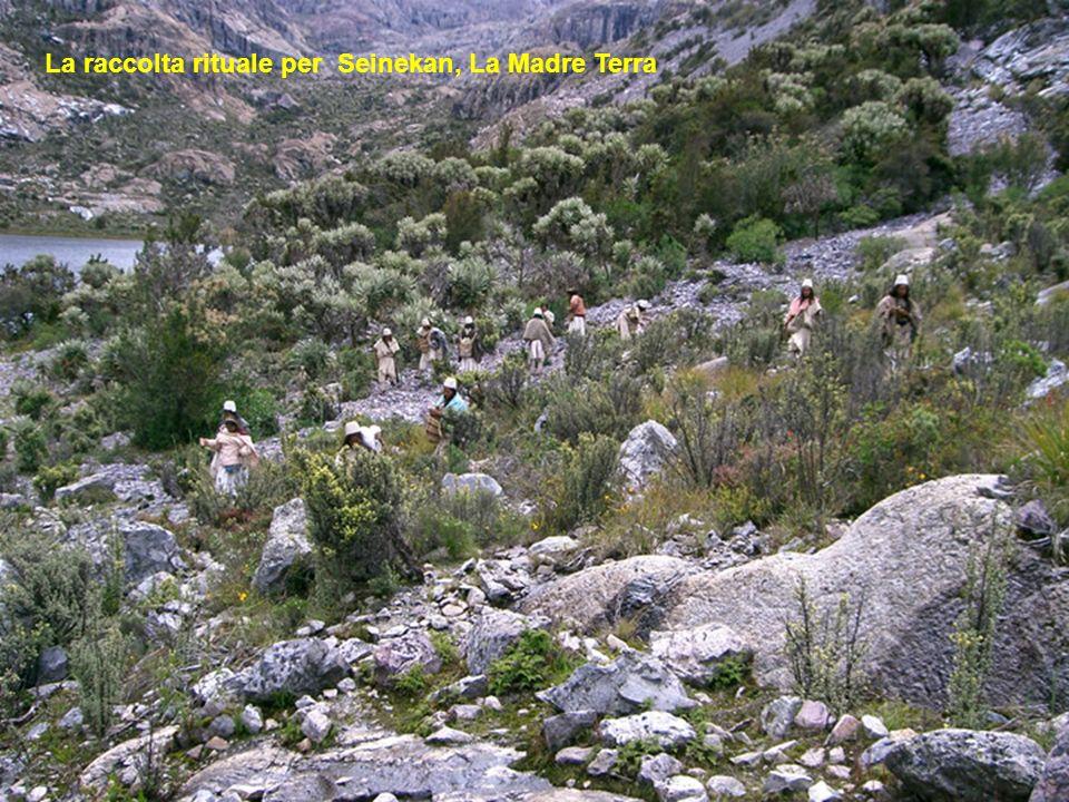 La raccolta rituale per Seinekan, La Madre Terra