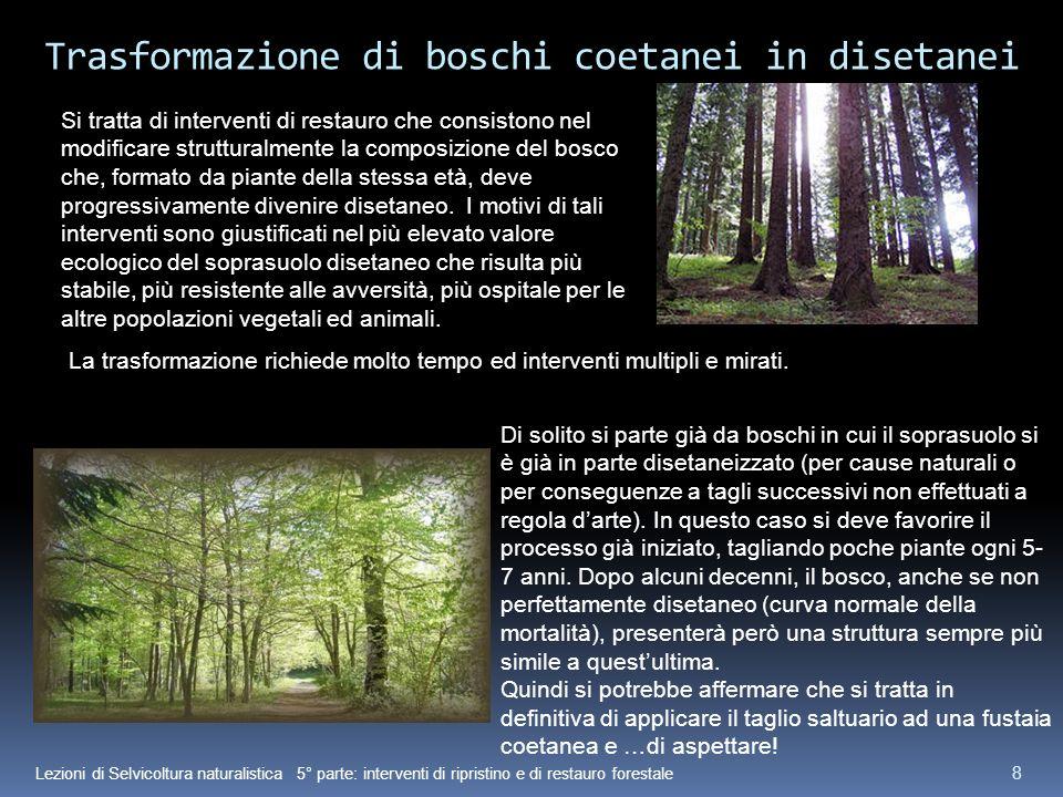 Trasformazione di boschi coetanei in disetanei
