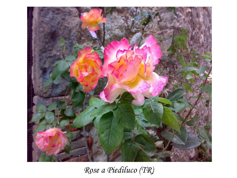 Rose a Piediluco (TR)