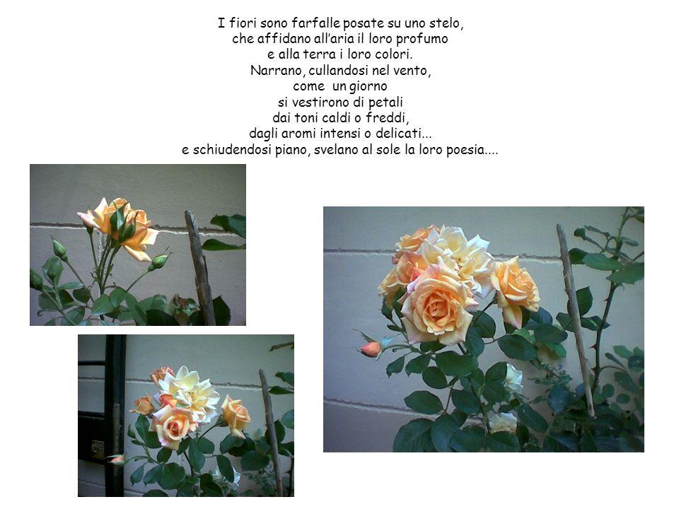 I fiori sono farfalle posate su uno stelo, che affidano all'aria il loro profumo e alla terra i loro colori.