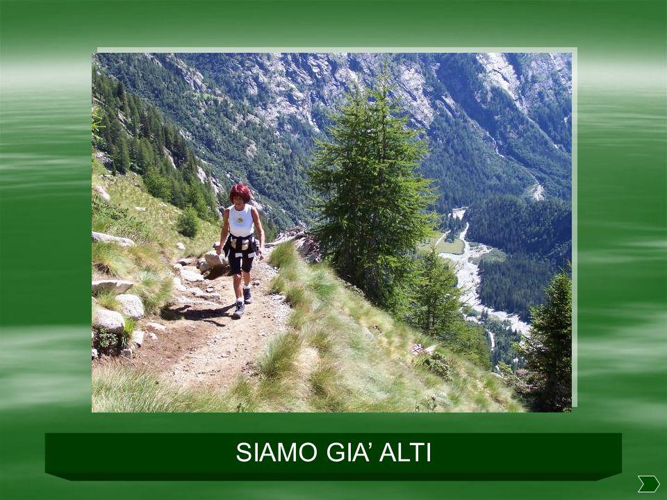 SIAMO GIA' ALTI