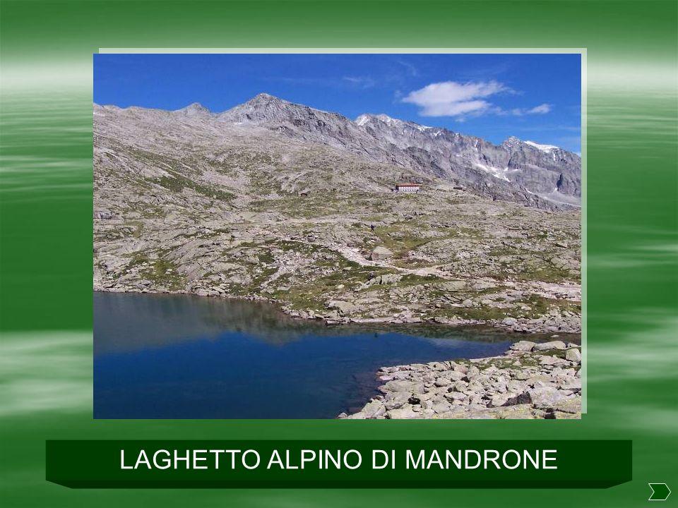 LAGHETTO ALPINO DI MANDRONE