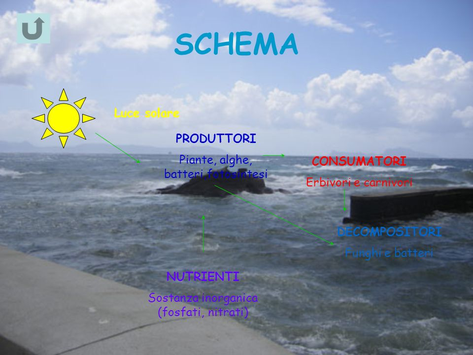 SCHEMA Luce solare PRODUTTORI Piante, alghe, batteri,fotosintesi
