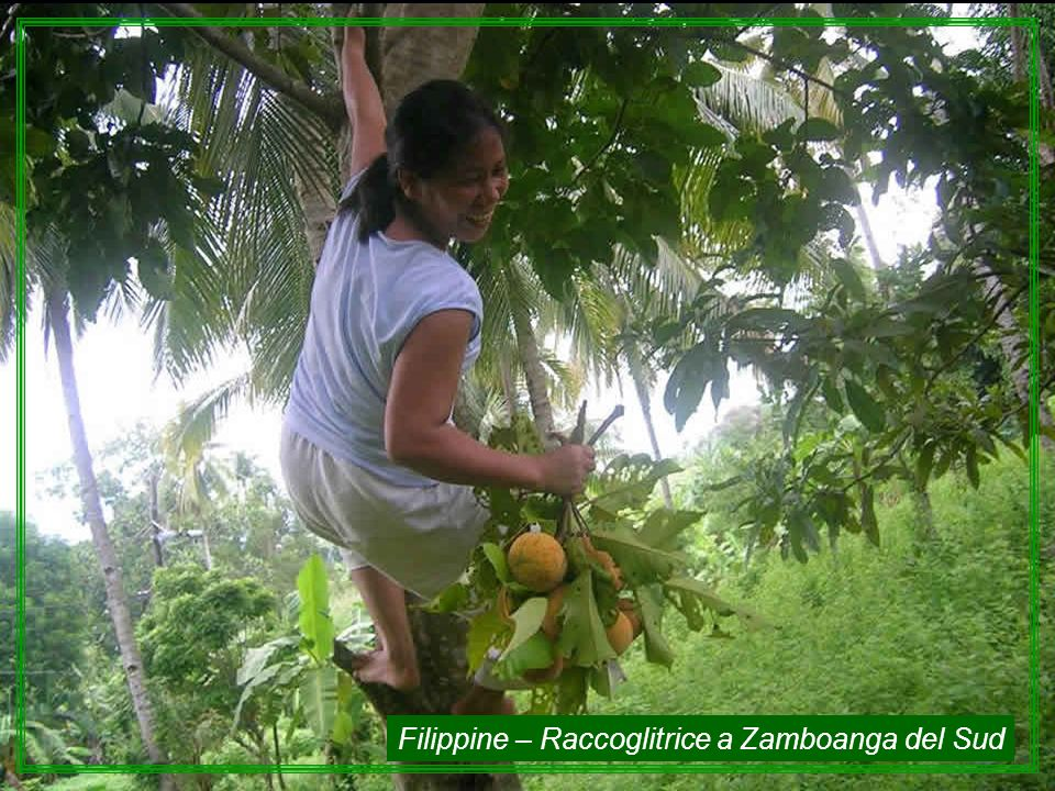 Filippine – Raccoglitrice a Zamboanga del Sud
