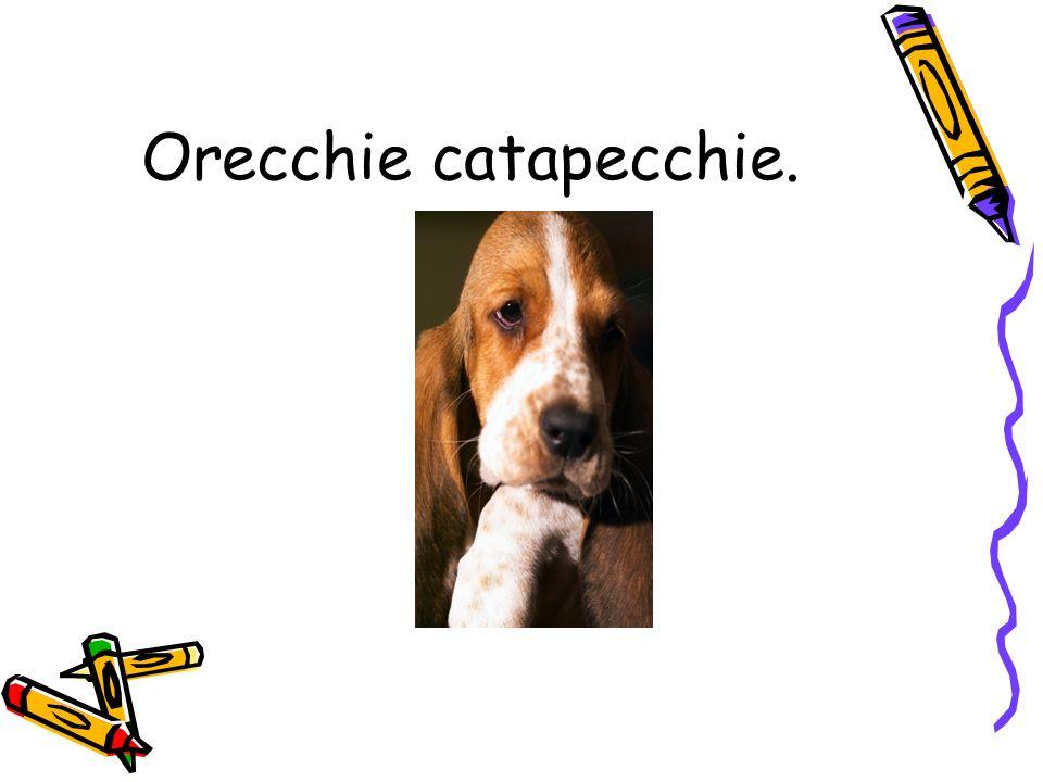 Orecchie catapecchie.