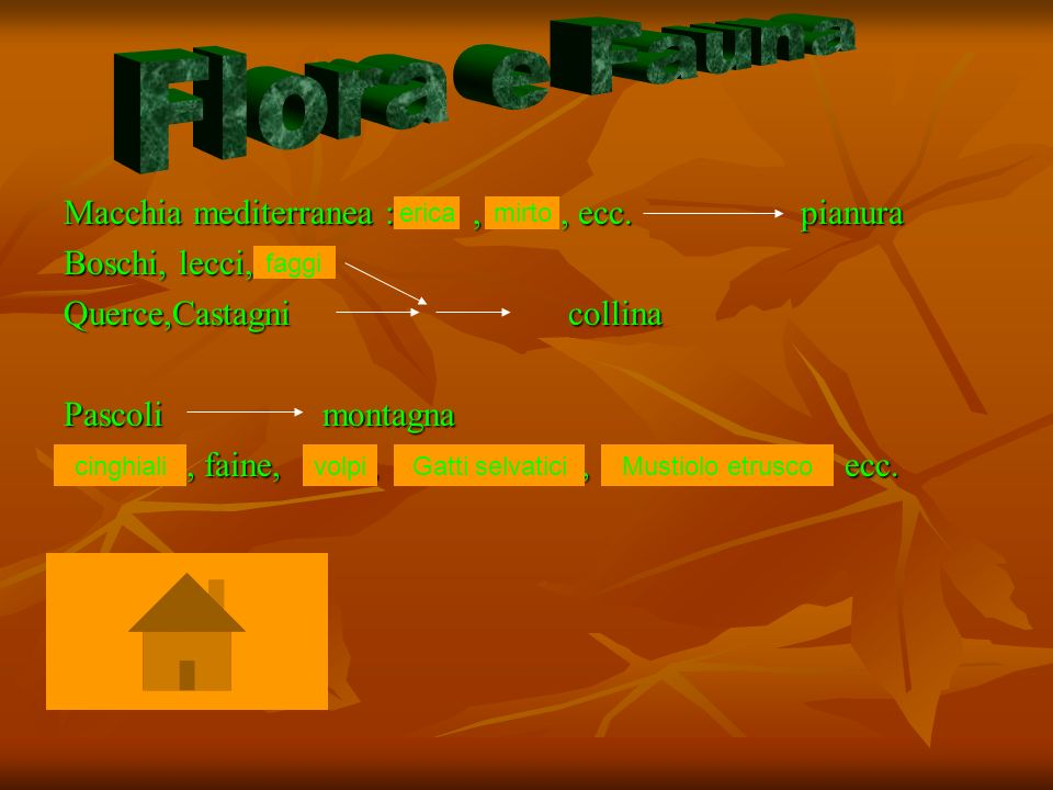 Flora e Fauna Macchia mediterranea : , , ecc. pianura Boschi, lecci,