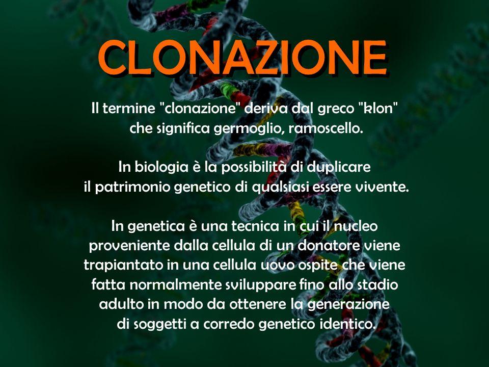 CLONAZIONE Il termine clonazione deriva dal greco klon