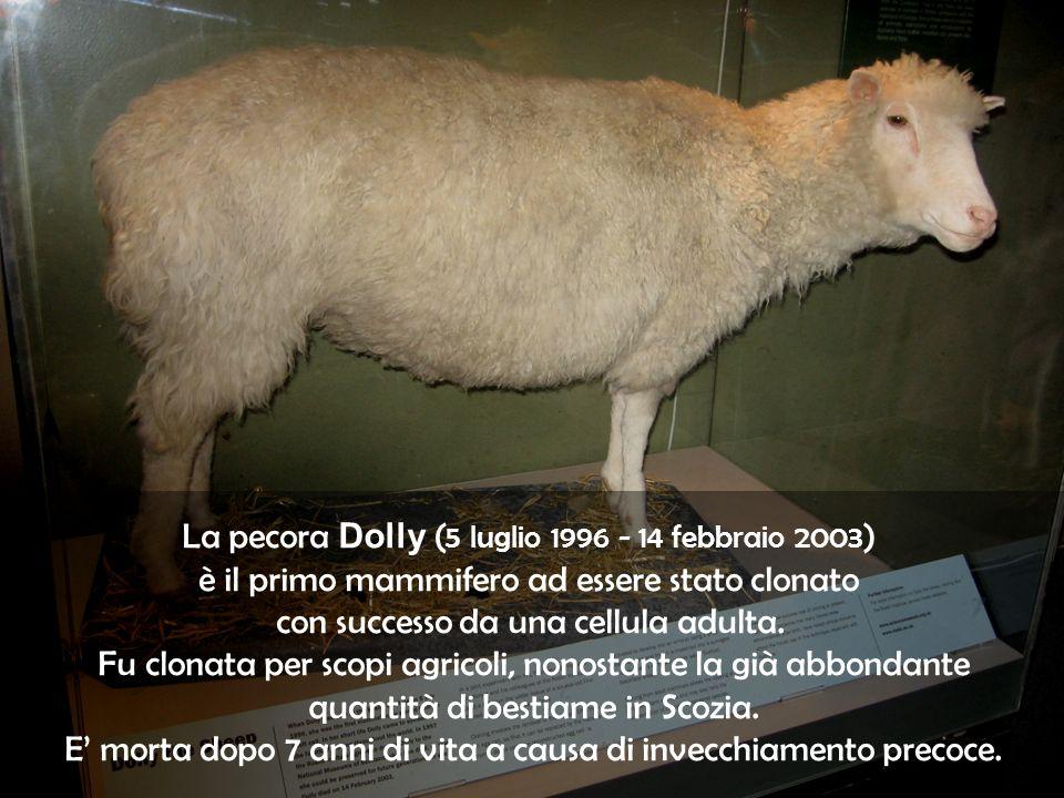 La pecora Dolly (5 luglio 1996 - 14 febbraio 2003)