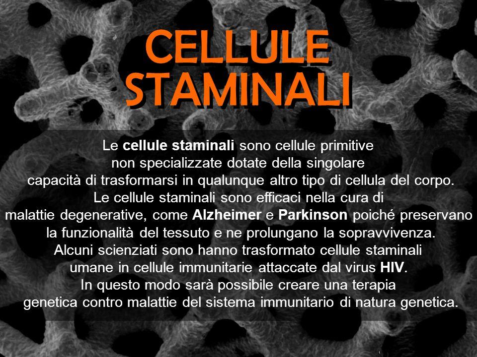 CELLULE STAMINALI Le cellule staminali sono cellule primitive