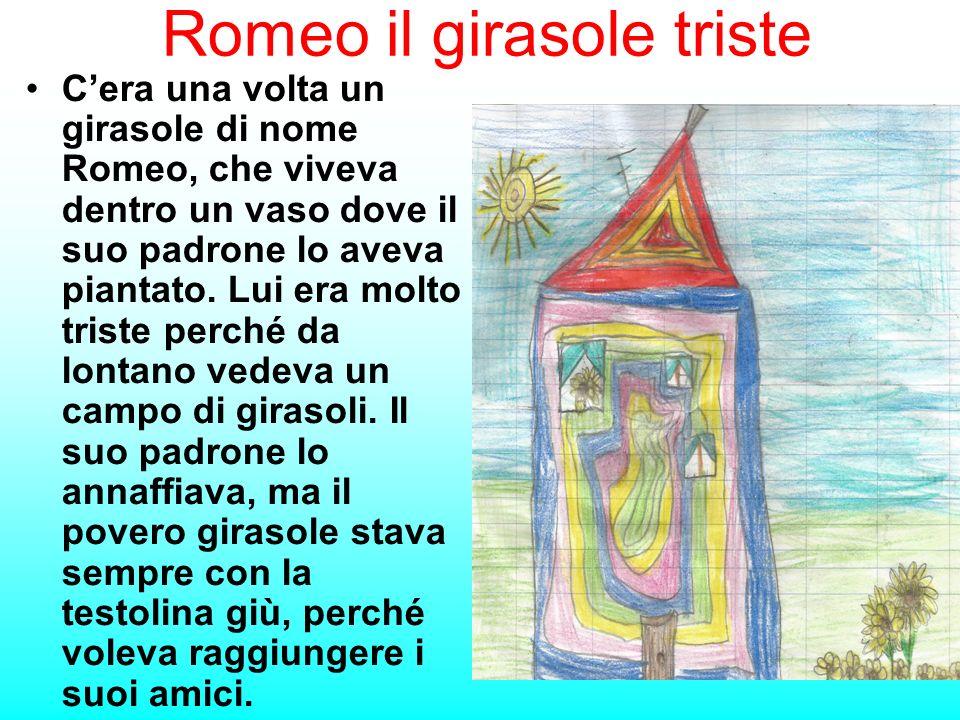 Romeo il girasole triste