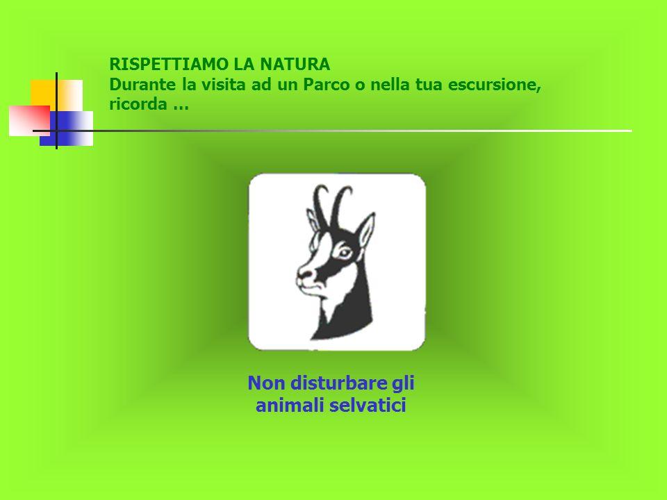 Non disturbare gli animali selvatici