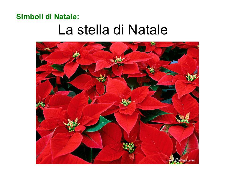 Simboli di Natale: La stella di Natale