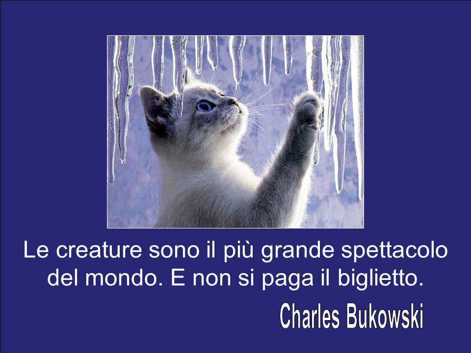 Charles Bukowski Le creature sono il più grande spettacolo del mondo.