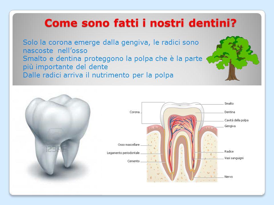 Come sono fatti i nostri dentini
