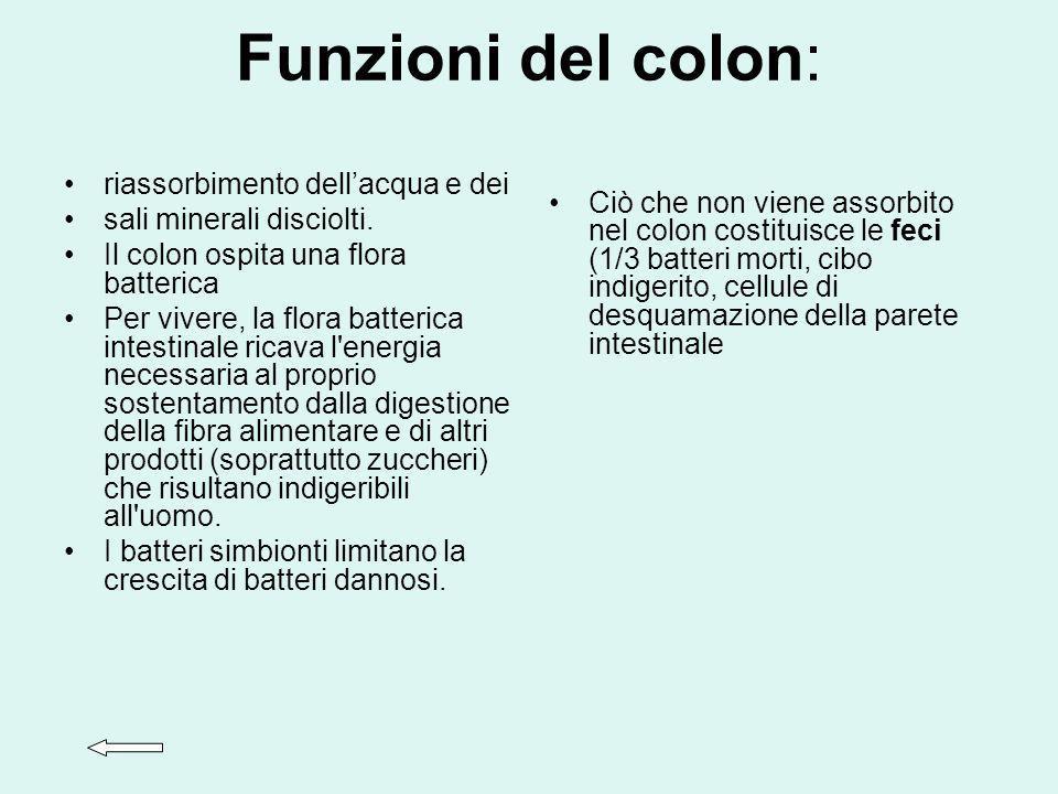 Funzioni del colon: riassorbimento dell'acqua e dei
