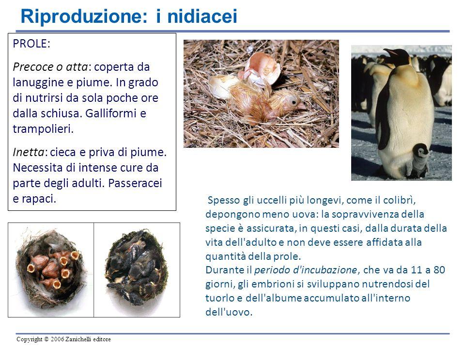 Riproduzione: i nidiacei
