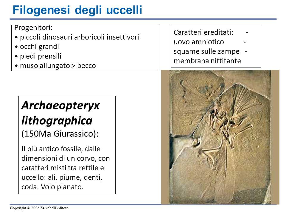 Archaeopteryx lithographica (150Ma Giurassico):