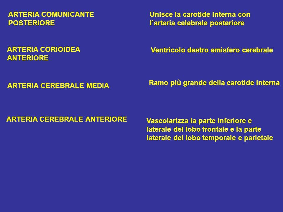 ARTERIA COMUNICANTE Unisce la carotide interna con