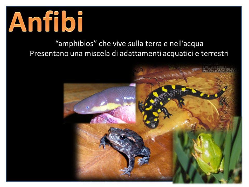 Anfibi amphibios che vive sulla terra e nell'acqua