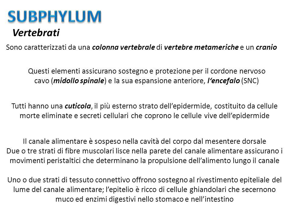 muco ed enzimi digestivi nello stomaco e nell'intestino
