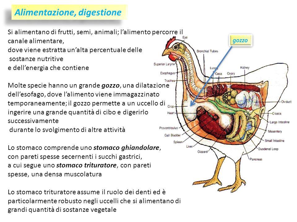 Alimentazione, digestione