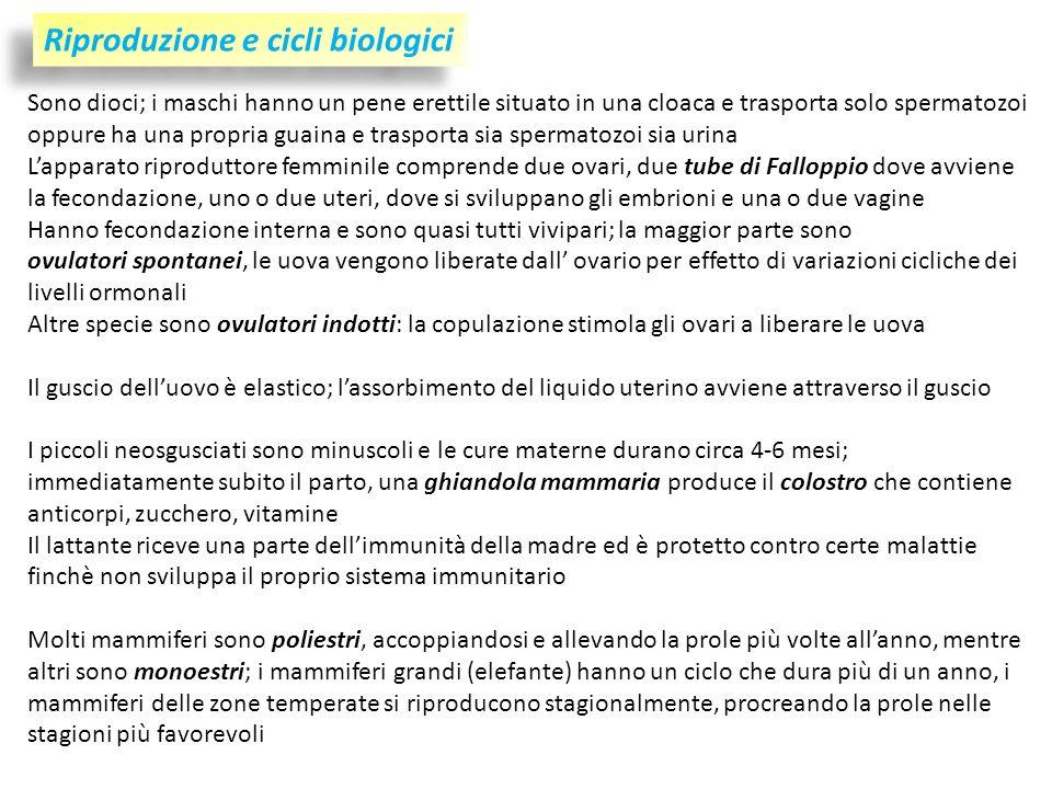 Riproduzione e cicli biologici