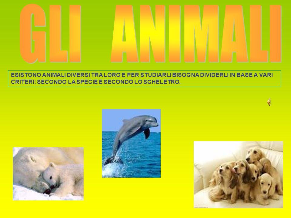 GLI ANIMALI ESISTONO ANIMALI DIVERSI TRA LORO E PER STUDIARLI BISOGNA DIVIDERLI IN BASE A VARI CRITERI: SECONDO LA SPECIE E SECONDO LO SCHELETRO.