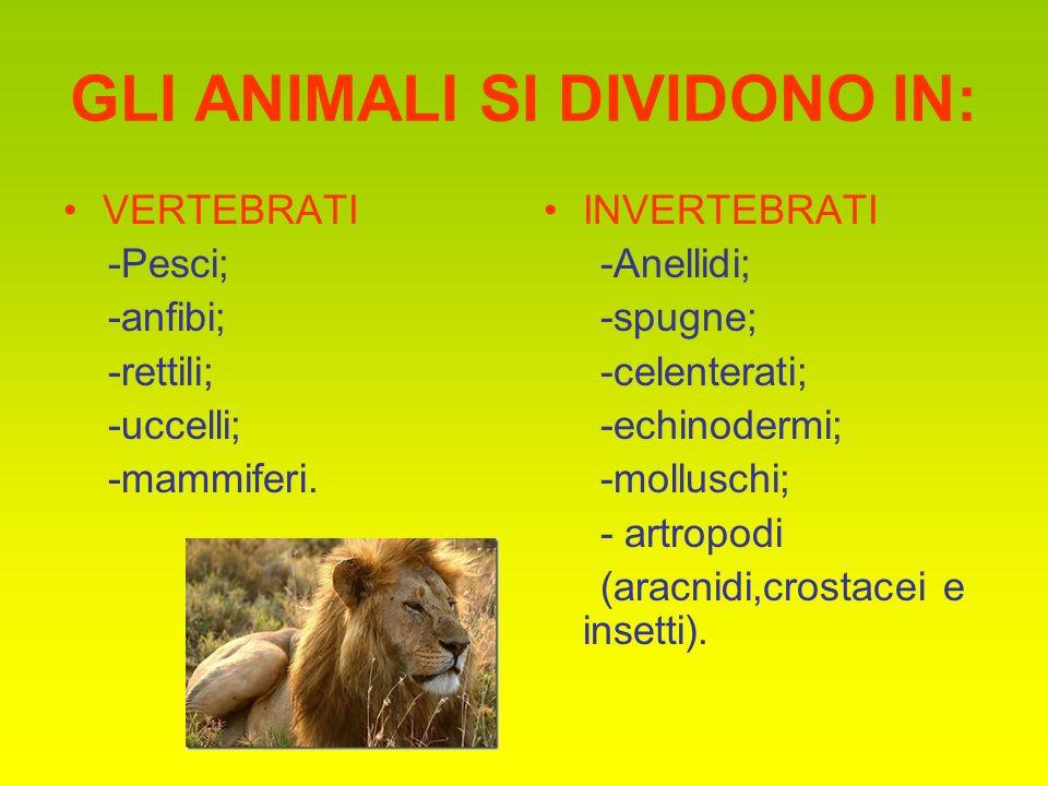 GLI ANIMALI SI DIVIDONO IN: