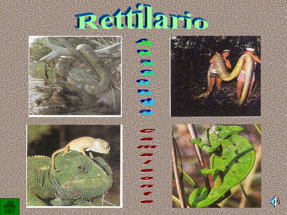 Rettilario Anaconda Camaleonte