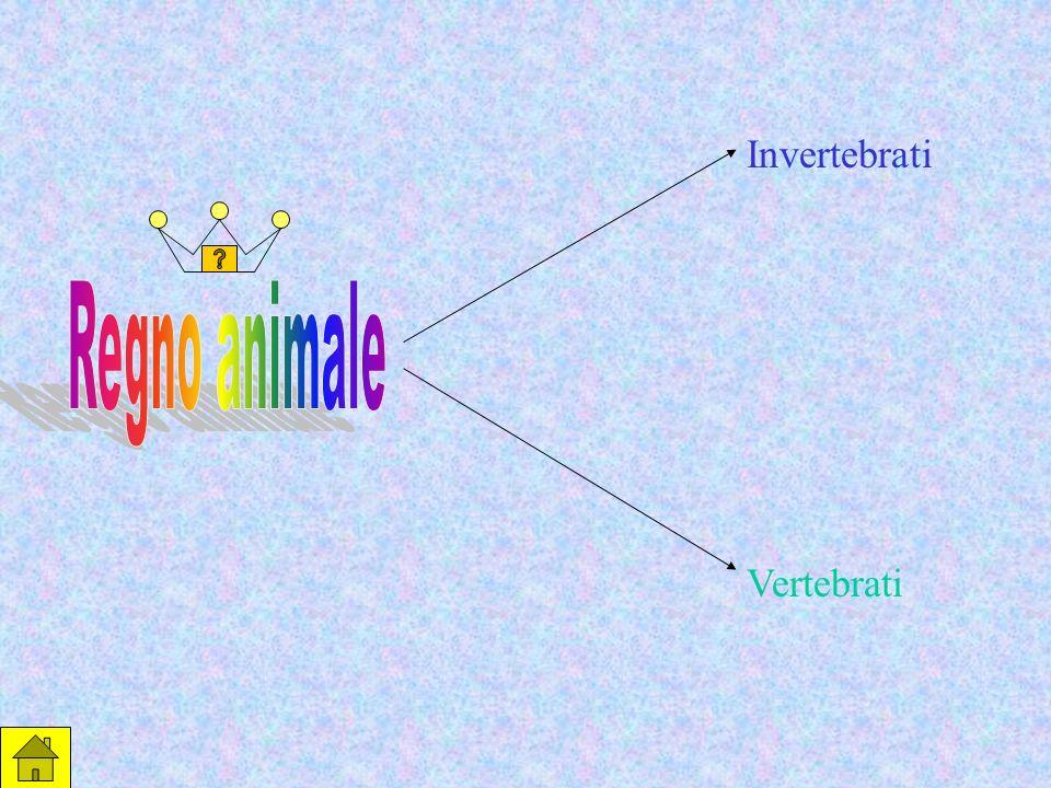 Invertebrati Regno animale Vertebrati