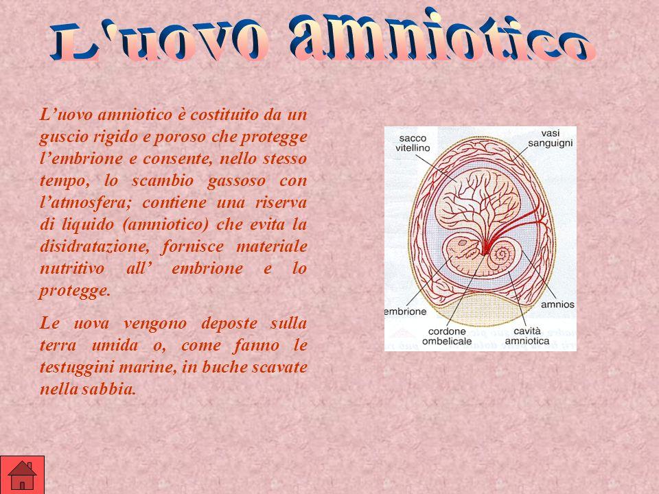 L uovo amniotico