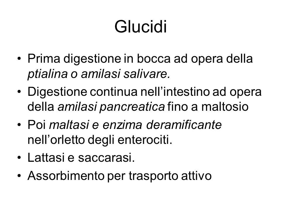 Glucidi Prima digestione in bocca ad opera della ptialina o amilasi salivare.