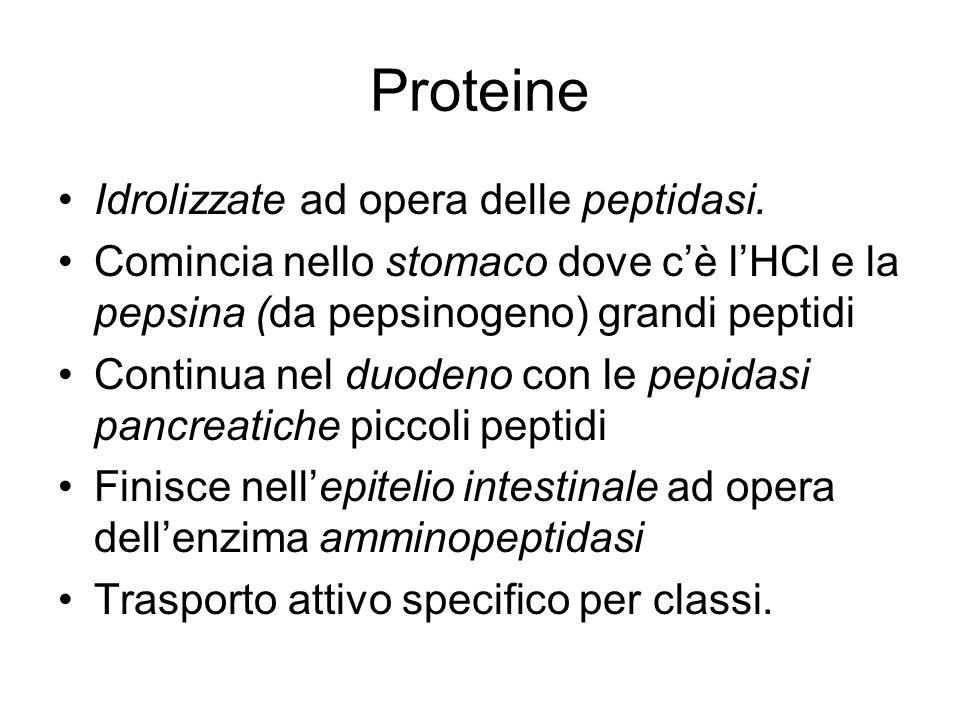 Proteine Idrolizzate ad opera delle peptidasi.