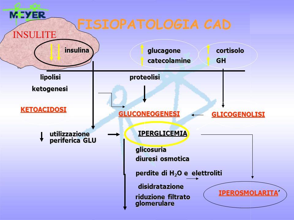 FISIOPATOLOGIA CAD INSULITE insulina glucagone cortisolo